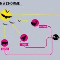 Pourquoi et comment l'Ebola s'est répandu aussi vite... Réponse en vidéo
