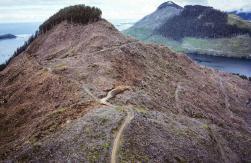 La déforestation par Garth Lentz