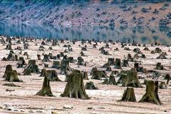 Les effets de la déforestation aux États-Unis par Daniel Dancer