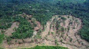 Photo publiée par l'institut brésilien Ibama montrant une zone touchée par la déforestation en Amazonie, le 21 mars 2014 afp.com/HO