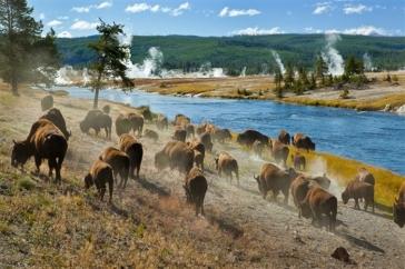 Le parc national de Yellowstone aux États-Unis offre plus d'un millier de miles de randonnées !
