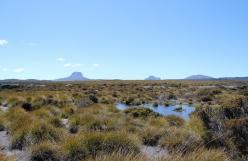 L'accès à l'Overland Track en Tasmanie est limité et coûte 130 euros. Le chemin se situe dans le magnifique parc national de Cradle Mountain en Australie !