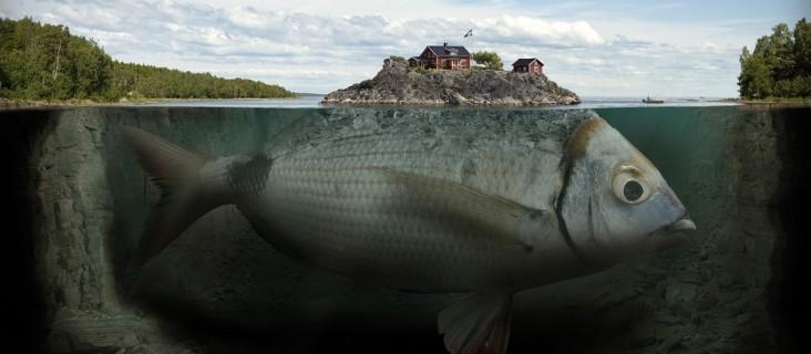 Si ce poisson bouge, la maison aussi !
